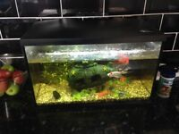 70l tank accessories and fish