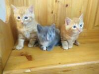 Kittens ready for new home now