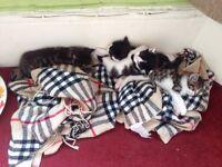 4 beautiful kittens for sale £100 each