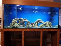 Swap or sale 5x2x2 marine tank, sump and custom stand