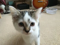 Kittens for free