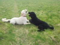 Premier Pet Care Services Dog Walking Pet Services Dog Grooming Deshedding Treatment Perthshire