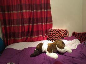 A medium single bedroom for a lady