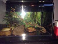 Reptile vivarium and accessories heat mat vitamins and feeding bowls