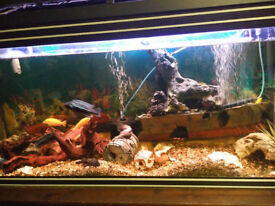 4ft fishtank full set up with stand