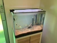 Includes tank, stand, fish, food, lighting and filter. All must go.