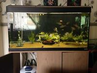 3ft tank and stand