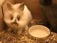 2 male rabbit needing a good home