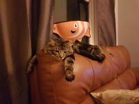 Missing Cat - Prestonpans