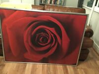 Large red rose picture