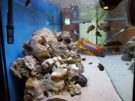 Juwel Rio 400 Aquarium full setup