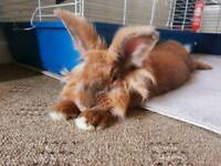 Two beautiful bunnies need a new home!