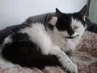 Adorable Black/White cat needs re-homing