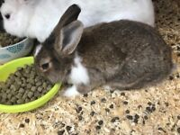 2 lovely baby rabbits 3 month old in north london