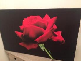 Black canvas with red rose