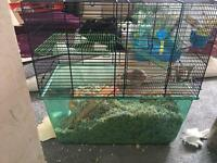 3 gerbils and cage need to go asap