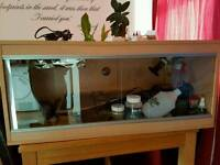 Vivarium - 3ft x 16in x 14in with stand (full set-up)