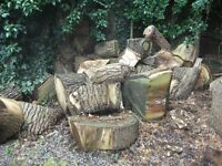 Free wood for wood burner from Oak tree felled 2 years ago