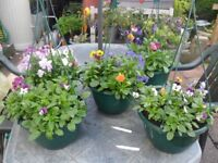 Selection of autumn/winter baskets and planters