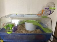 Male Hampster and cage