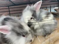 Bunnies/ rabbits