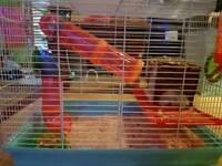 Hamster cage bundle