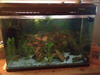Tropical fish tank and fish