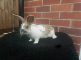 Stunning super tame! baby rabbit
