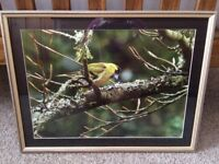 Gallery Framed Photograph for bird watchers!