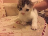 Kittens for sale and need rehoming urgently
