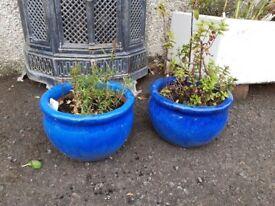 2 x Beautiful Blue Glazed Ceramic Pots with Herbs.