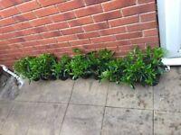 20 GARDEN PLANTS IN POTS