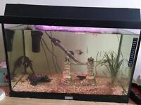 60 litres tropical fish tank aquarium