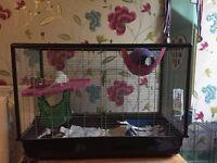 Male rats x2 plus cage