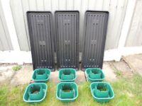 Tomato grow bag trays and halos