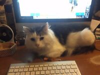 TWO CATS TO BE REHOMED (FREE TO A GOOD HOME)