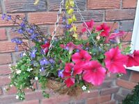 Planted hanging baskets&70+ plants