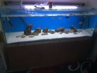 Fish tank for sale (6x2x2)