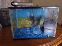1ft fish tank set up