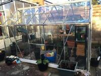Greenhouse 6x10ft aluminium frame & glass panels. Buyer must dismantle & collect.