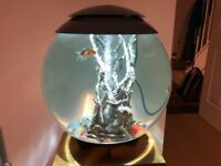 Oase BiOrb Halo - 60L - Grey - inc Heater, Fish and Plants as per Photo