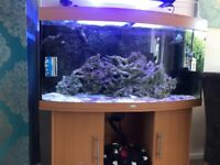 4ft jewel bow frontmarine fish tank complete set up