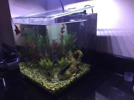 Fish Tank Aqua One Aspire 22