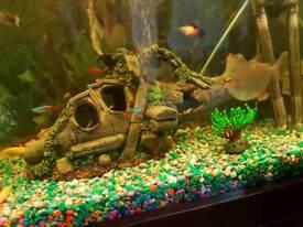 Fish tank ordements