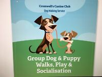 Group dog & puppy walking,play and socialisation