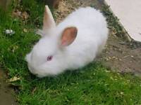 Rabbits for sale with hutch