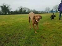 Think Pets - Fun Group Dog Walks