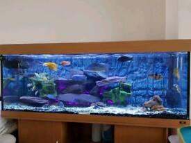 Aquarium Fish Tank 5ft Juwel
