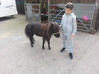 Miniature Horse 31 inch