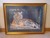 Framed Tiger Print by Stephen Gayford